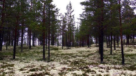 Moos-Wanderung durch den Wald.